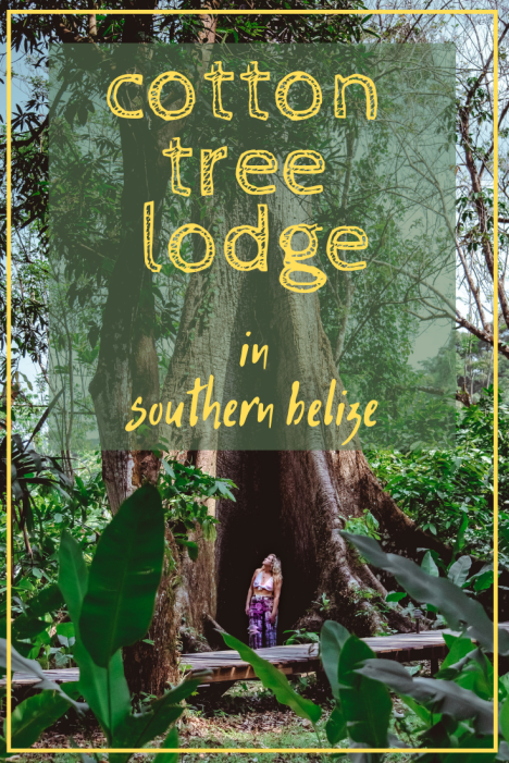cotton tree lodge